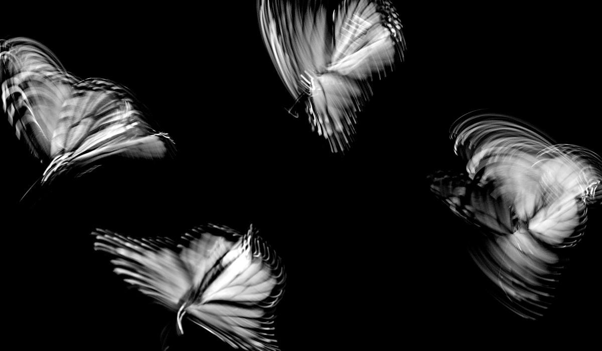 vier schmetterlinge fliegend